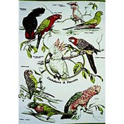 Cockatoos & Parrots Tea Towel