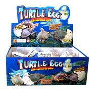 Hatch & Grow - Turtle Eggs