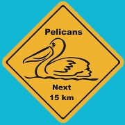 Suction Roadsign Pelican