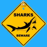 Suction Roadsign Shark