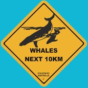 Suction Roadsign Whales