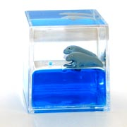 Paperweight Cube Dugong